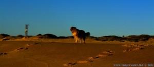 Nicol checkt die Lage - Sunset at Praia da Comporta - Portugal