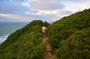 Nicol im Busch - Praia da Aguda – Portugal