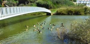 Alle meine Entchen, schwimmen auf dem See - Ribeira São Lourenço – Portugal
