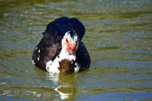 Ente unbekannter Art - Ribeira de São Lourenço – Portugal