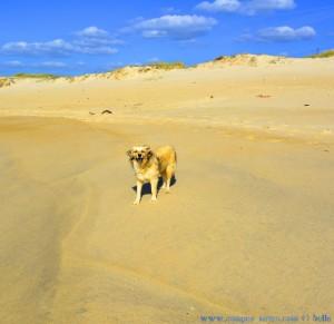 Nicol at Praia das Pedras Negras – Portugal