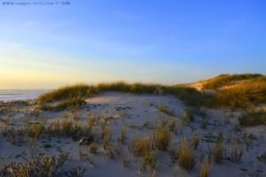 Nicol in ihren heissgeliebten Dünen - Praia das Pedras Negras – Portugal