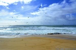 Möwen am Praia das Pedras Negras - Unnamed Road, Portugal