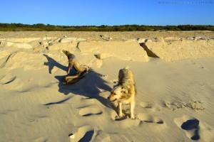 Nicol ist ganz schmal bei dem Wind in Costa de Lavos – Portugal