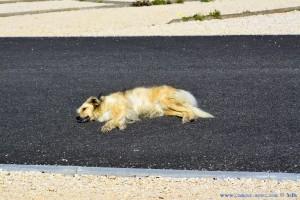 Nicol - wie immer - Mitten in der Strasse!