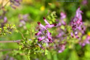 Hübsche Blüten in Costa de Lavos - Portugal