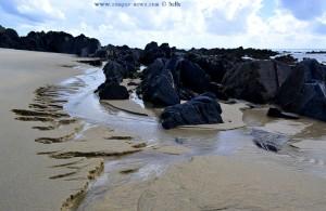 Schwarze Felsen und austretendes Grundwasser am Praia de Afife - Portugal
