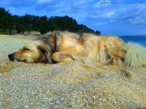 Nicol leistet mir Gesellschaft am Playa de Mourisca – Spain
