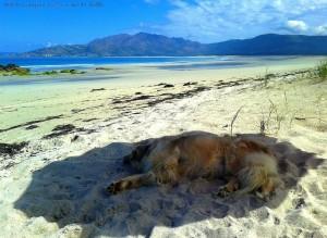 Lazy Nicol at Praia de Carnota – Spain