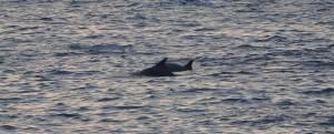 Nein! Delfine am Praia O Riás – Spain