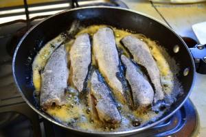 MINI-Forellen zum Dinner