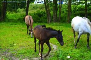 Pferde in El Peral - Calle Peral, 110A, 33590, Asturias, Spanien