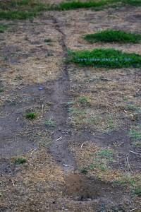 Ameisen-HighWay in Huerta am Río Tormes – Spain
