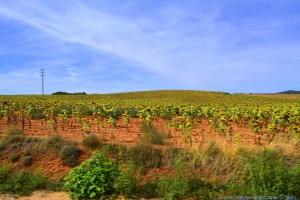 Castilla-La Mancha - das Sonenblumen Land - on the Road – Spain