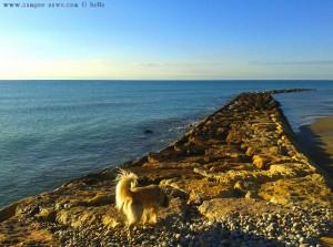Nicol will mit aufs Bild - Playa de Torrenostra - Torrenostra – Spain