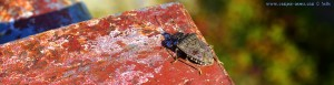 Käfer am Lago di Pianfei – Italy