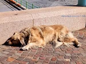 lazy Nicol beim Sonnen - Genua – Italy