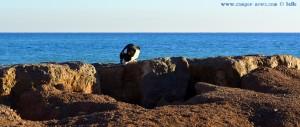 Unerschrockene Katze am Platja de la Llosa – Spain