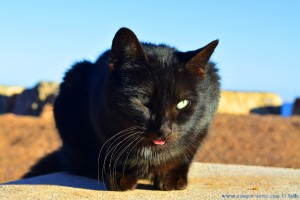 Hübsche schwarze Katze am Platja de la Llosa – Spain