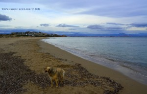 Nicol am Playa de Los Arenales del Sol – Spain