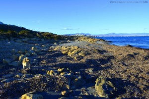 Nicol beim Spaziergang - nahe Platja del Carabassí - Santa Pola – Spain