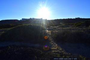 Nicol untersucht jeden Busch - Spaziergang zum Playa de Los Arenales del Sol – Spain