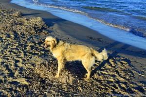 Glückliche Nicol am Playa de los Arenales del Sol – Spain