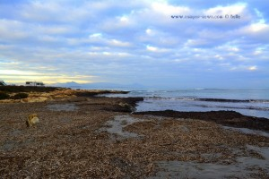 Nicol am Playa la Ermiza – Spain