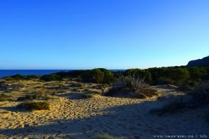 Das Pinienwäldchen ist nah - Playa de Los Arenales del Sol – Spain