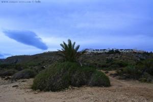 Da ist doch was im Busch - Platja del Carabassí - Santa Pola - Spain