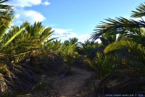 Wie im Urwald - Platja del Carabassí - Santa Pola – Spain