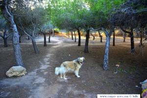 Glückliche Nicol im Pinienwäldchen am Platja del Carabassí - Santa Pola – Spain
