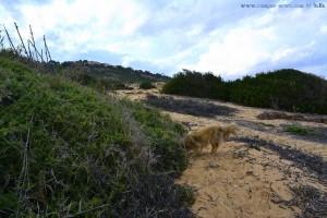 Da ist doch was im Busch - Nicol in den Dünen am Platja del Carabassí - Santa Pola – SpainDa ist doch was im Busch - Nicol in den Dünen am Platja del Carabassí - Santa Pola – Spain