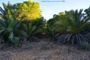 Ahhhhh gerade noch erwischt die Süsse - Platja del Carabassí - Santa Pola – Spain