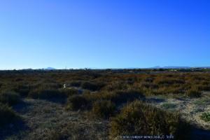 Nicol auf Hasenjagd - Playa de Torre Derribada - San Pedro del Pinatar – Spain