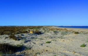 Nicol schon etwas müde von der Hasenjagd - Playa de Torre Derribada - San Pedro del Pinatar – Spain