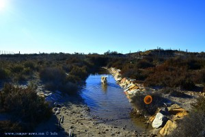 Nicol braucht Wasser nach der Hasenjagd am Playa de Torre Derribada - San Pedro del Pinatar – Spain