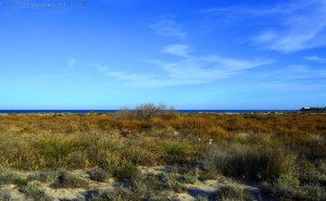 Nicols Lieblings-Busch bei der Hasenjagd am Playa de Torre Derribada - San Pedro del Pinatar – Spain