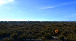 Nicol bei der Hasenjagd in den Büschen am Playa de Torre Derribada - San Pedro del Pinatar – Spain
