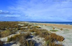 Nicol at Playa de Torre Derribada - San Pedro del Pinatar – Spain