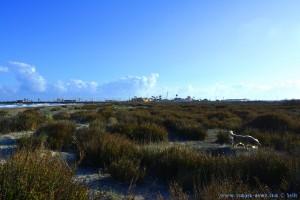 NIcol auf der Jagd am Playa de Torre Derribada - San Pedro del Pinatar – Spain