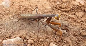 Was für ein Tier ist das? Santa Pola – Spain