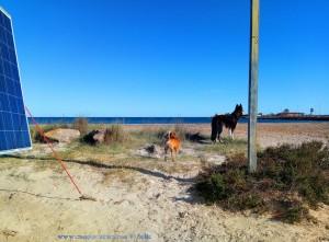 Milo und ??? am Playa de Torre Derribada - San Pedro del Pinatar – Spain