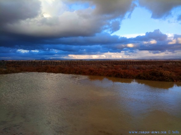 Überall Wasser - Lagoa de Playa de Torre Derribada - San Pedro del Pinatar – Spain