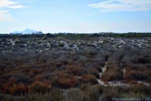Nicol ganz busy - Playa de Torre Derribada - Pedro del Pinatar – Spain