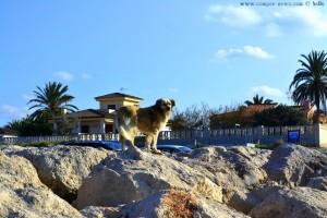 Nicol auf einem Wellenbrecher am Platja L'Almadrava - Dénia – Spain