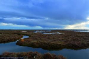 Flamingos im Delta de l'Ebre - Delta del Ebro – Spain – 18mm