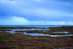 Flamingos im Delta de l'Ebre - Delta del Ebro – Spain - 55mm