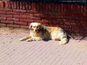 Auch Nicol geniesst die Sonne im Windschatten am Platja de Gavà – Spain