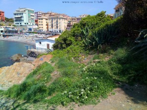 Das Bisschen Grün für Nicol in Genova – Italy